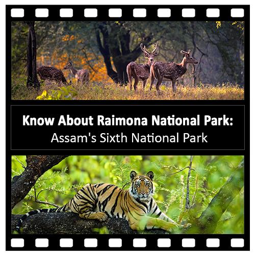 Know-About-Raimona-National-Park-Assams-Sixth-National-Park
