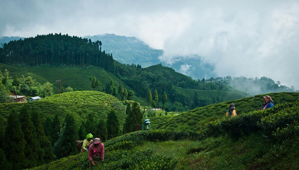 Darjeeling -Monsoon Destinations In India